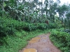 coorg_052