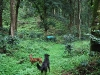 coorg_055