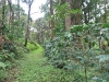 coorg_059