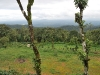 coorg_080